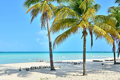 White sand beach, turquoise water, palm trees